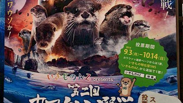 Preocupa el furor desatado en Japón por la adquisición de nutrias como mascotas