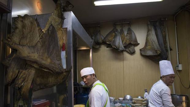 Aprueban una prohibición de aleteo más rigurosa para los tiburones mediterráneos