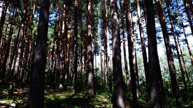 Fundación Montemadrid ha puesto en marcha el programa ReforestaAcción