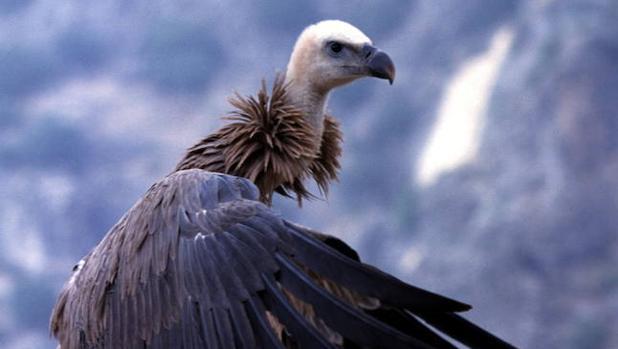 Las principales amenazas a que se enfrentan nuestras especies más icónicas