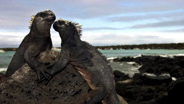 El primer aeropuerto ecológico del mundo está en las Islas Galápagos