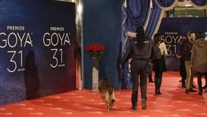 La gala de los Premios Goya, en directo