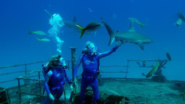 Imagen de «Las maravillas del mar»