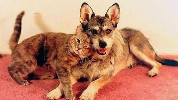 La maravillosa historia del perro que dedic su vida a salvar