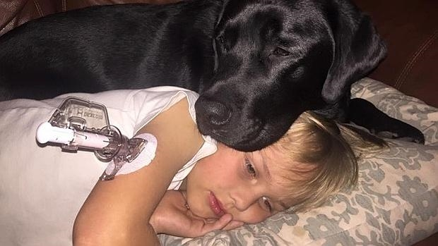 Jedi, el perro detector de diabetes que salvó a su dueño de 7 años mientras sus padres dormían
