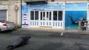 La adorable foca que visita a diario su restaurante favorito