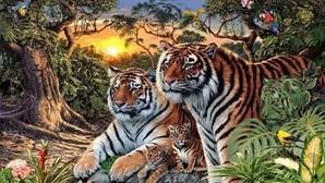 Pocos saben el número exacto de tigres de esta imagen