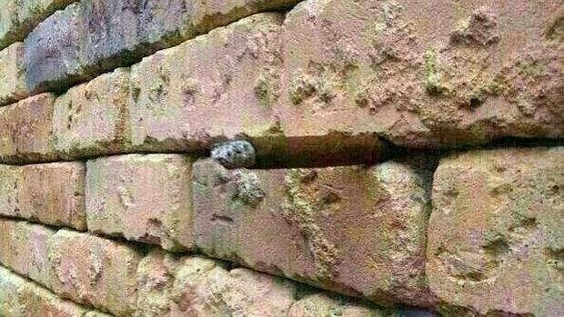 La ilusión óptica de un pared de ladrillos que se ha hecho viral