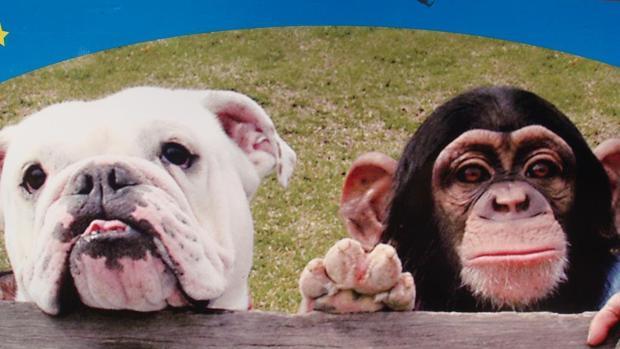 Youtube El Mono Pankun Y Su Perro James La Curiosa Pareja Que