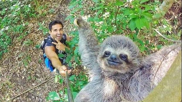 Un joven consigue hacerse un selfie con un perezoso desde las alturas