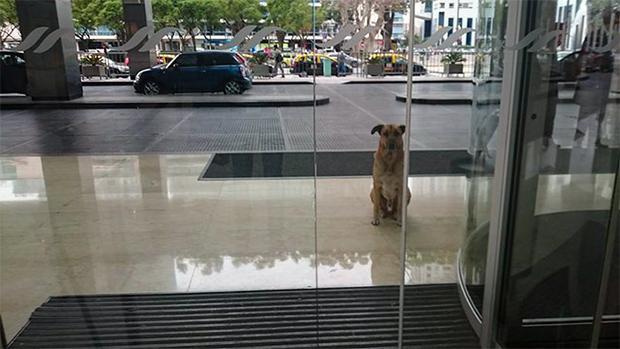 El perro que esperó seis meses a la mujer que quería como dueña