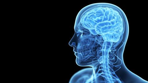 Cada zona del cerebro ejerce una función distinta