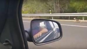 YouTube: Un perro persigue desesperadamente por carretera el coche de sus dueños tras ser abandonado