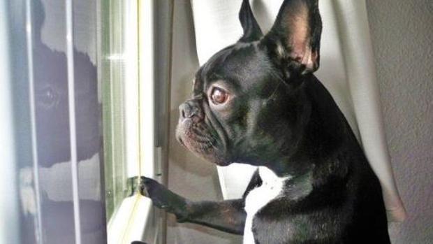 Twitter:  Los últimos mensajes del perro de Carrie Fisher en Twitter: «Te estaré esperando aquí, mami»