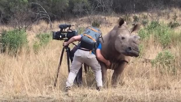 Garth de Bruno Austin rasca la barriga a una hembra de rinoceronte