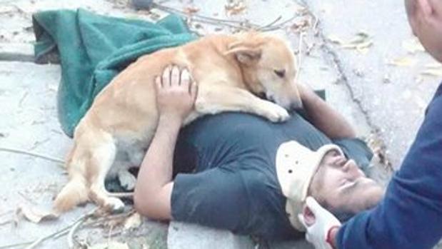 El perro acude a ayudar a su dueño herido