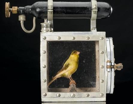 Resucitador de canarios