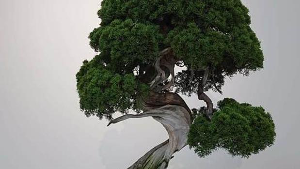 Un ejemplar de «Shimpaku Juniper», un bonsái muy valorado