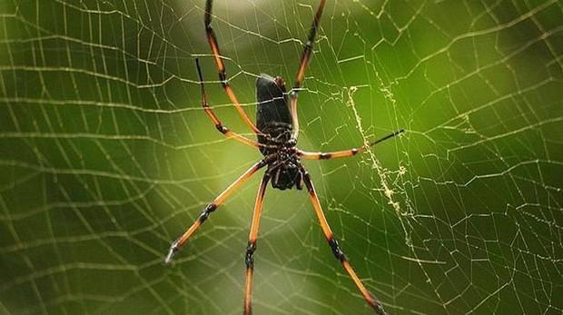 La aracnofobia, o miedo irracional a las arañas, es una de las fobias más comunes