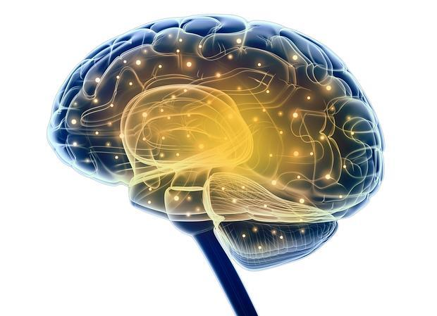 El estudio analiza cómo se distribuyen los astrocitos, las células más abundantes del cerebro