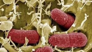 Los antibióticos deterioran la flora intestinal en los bebés