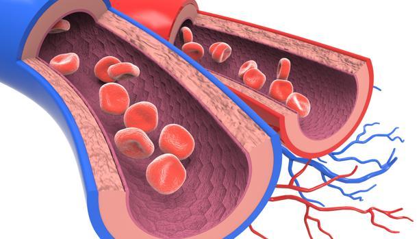 El c-LDL provoca efectos negativos más allá de la formación de trombos
