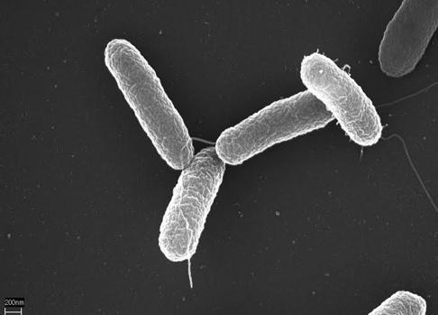 Ultimos Avances en Ciencia y Salud - Página 32 Bacteria-kQeC--620x349@abc