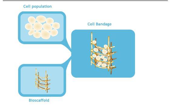 Esquema del vendaje: células madre, andamiaje y resultado final