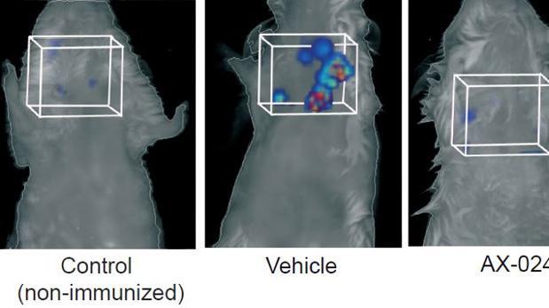 Efectos del compuesto en modelo de ratón