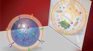 Desarrolladas células madre cardiacas sintéticas eficaces y más seguras que las 'naturales'