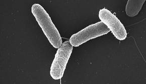 Algunas bacterias infecciosas nos empujan a comer para facilitar su transmisión