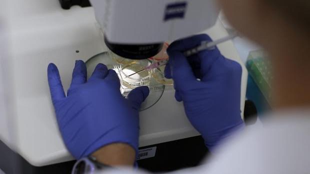Resultado de imagen de células madre en la esclerosis múltiple