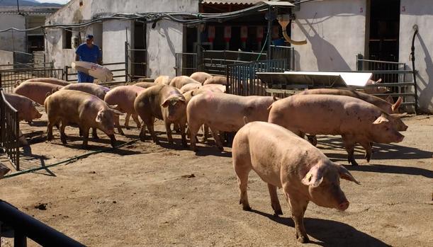 El tratamiento de animales con antibióticos agrava el problema de las resistencias