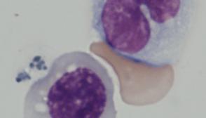 Cultivo de células madre en el laboratorio