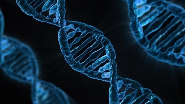 Alianza contra el cáncer: «corta y pega genético» e inmunoterapia