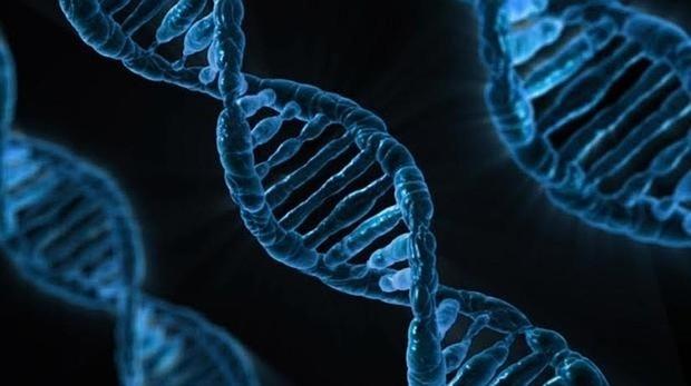 Firma genética