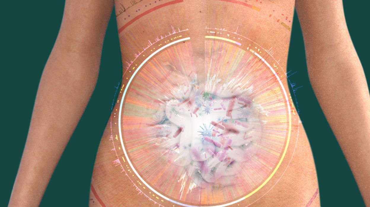 El mapa del intestino humano se completa con 2.000 nuevas bacterias