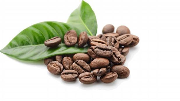 Dos compuestos del café pueden inhibi el cáncer de próstata en ratones