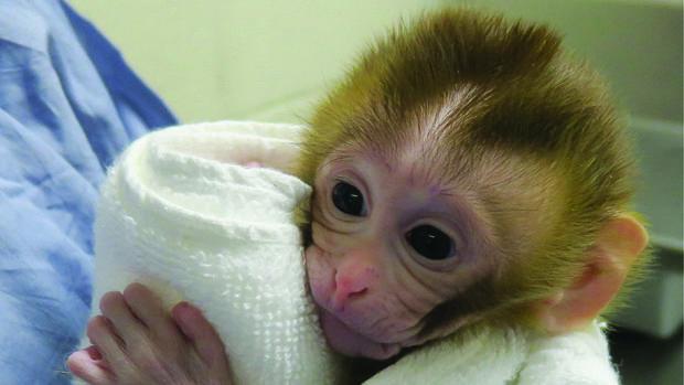 La monita Grady a las dos semanas de su nacimiento