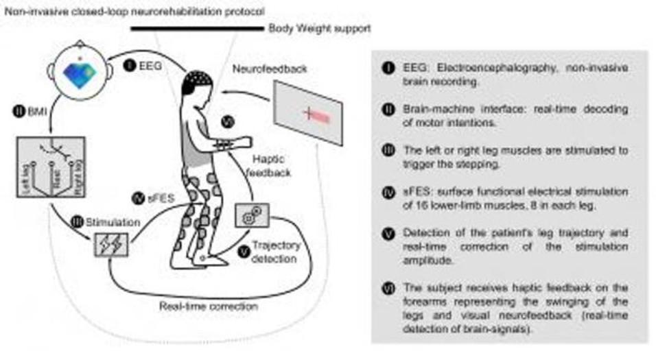 Dos parapléjicos logran andar gracias a la estimulación muscular no invasiva controlada por el cerebro