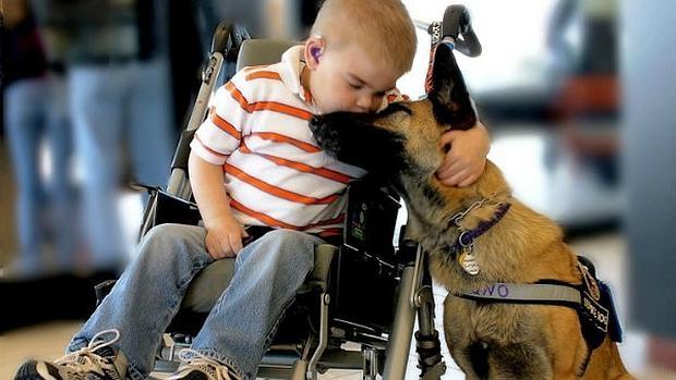 Varios estudios científicos demuestran los beneficios emocionales, psicológicos y físicos que las mascotas aportan a las personas