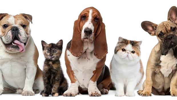 Moda, complementos nutricionales y limpiadores para mascotas en la feria Propet 2016