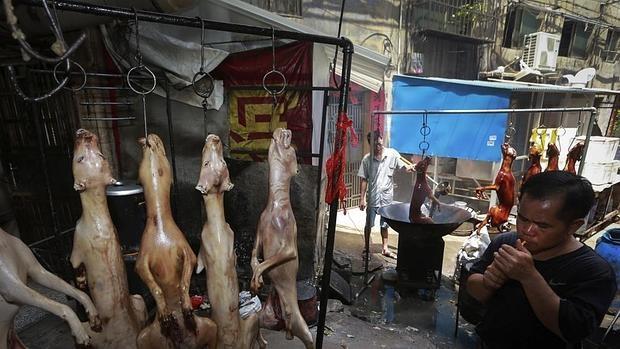 Son numerosas las voces y asociaciones que reclaman parar el consumo de carne de perro en China