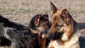 El olfato de los perros es clave para las operaciones de búsqueda y rescate