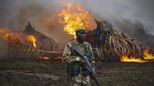 Un agente del Servicio de Conservación de la Fauna keniana patrulla frente a las pilas ardientes de colmillos de elefantes