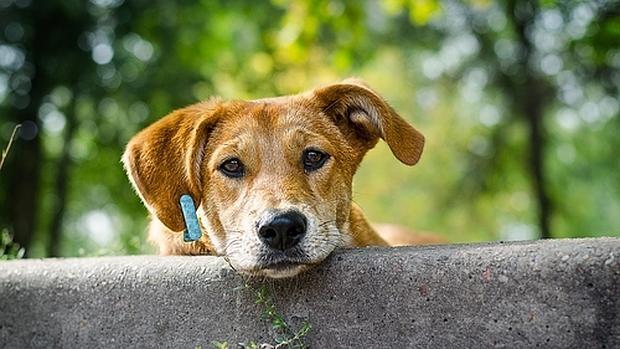 Un perro sin raza