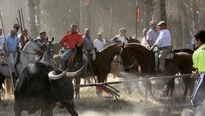 Tordesillas se revuelve contra el indulto al Toro de la Vega