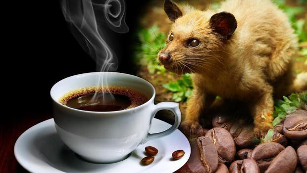 Hemeroteca: ¿Cuál es el café más caro del mundo? | Autor del artículo: Finanzas.com