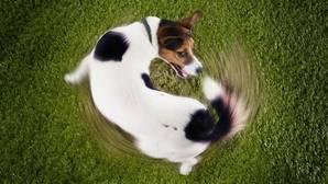 ¿Se ha vuelto loco mi perro?