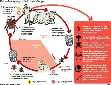 Enfermedades exóticas que han venido a España para quedarse